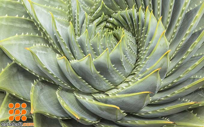 أفضل ثيمات ويندوز 10 Fibonacci Sequence